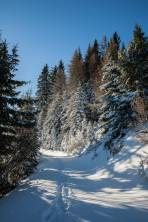 Weg vom Pollereshütte zur alten Piste