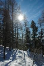 Aufstieg durch den Lärchen- und Zirbenwald