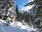 Endlich Winterzauber - kurz vor der Waldgrenze.