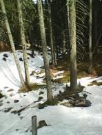 Kaum Schnee im Wald