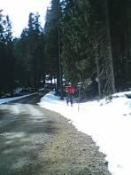 und auf der Forststrasse
