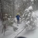 Aufstieg im Hohlweg im Wald unter der Schwarzbeeralm