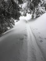 auch im Wald ausreichend Schnee