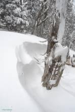 Im Wald war auch der stürmische Wind