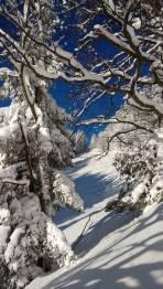 Schleierbachleit n mit schneebedeckten baumen