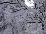 In Schattlagen waren Bäume noch tief verschneit
