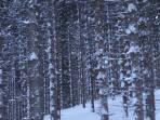 """""""ich seh den Wald vor lauter Bäumen nicht"""" - Aufstieg zur Haggenalm"""
