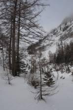 aus dem Wald heraussen