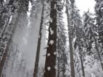 Schnee von oben; Hoodie oder Kapuze von Vorteil