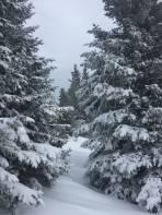 Winterwonderland im Wald unter den Windrädern