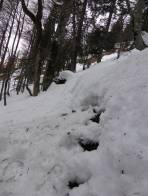 Schneemäuler im steilen Wald