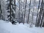 Pulverschnee im Wald