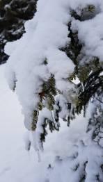 Hohe Schneefallgrenze auch im Pusterwaldgraben