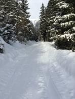 Forststrasse zur oberen Bodenhütte