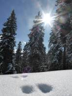 Spur im Schnee.