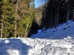 irgendein Forstweg nordseitig