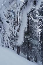 Schneekatzerl statt Palmkatzerl