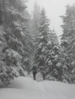 Märchenwald.