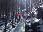 Fehlauslösug des Airbags im Wald...