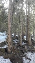 Im Wald tw nur noch ein schmales Band Schnee