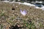 Frühling im Bergsteigerlager Ullutau