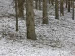 Graugrüner Teppich im Wald.