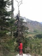Baumkletterarbeiten um das Seil der Materialseilbahn aus den Fängen der Bäume zu befreien