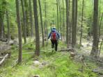 100 Hm Abstieg durch den Schutzwald oberhalb der Moarhütte