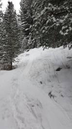 Sogar im Wald genug Schnee