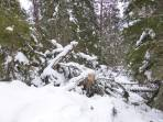 Starke Sturm- und Schneelastschäden im Pustertal.