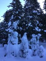 Schneemonster im Wald