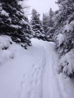 ausreichend Schnee in der Waldpassage