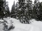 Im Wald genug Schnee für den Aufstieg