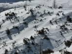 Großartige Schneelage - die Latschen sind nahezu vollständig überdeckt.
