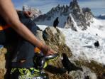 Sehr gesittet, sie kommen immer einzeln zur Futterausgabe! Im Hintergrund (leicht gekappt) der Paternkofel (2744 m).