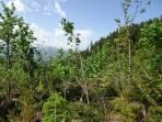 hier war vor kurzem kein Wald zu sehen. Fichten abgeknickt, Ahornbäume wiederauferstanden ;-)