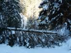 Bei der Abfahrt versperrt ein umgestürzter Baum im Lappental den Weg.