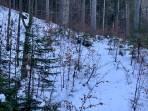 Wenig Schnee im Waldbereich