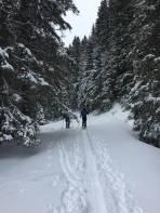 Im Wald auf der Forststrasse vor der Abzweigung zur Scharnitzalm