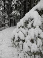 Winterwunderland im Almenland.