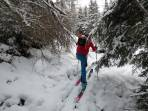 Aufstieg zur Baumgrenze