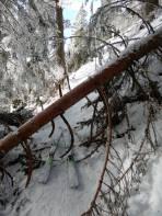 Umgestürzte Bäume sind des Waldbesitzers und des Skitourengehers Leid.