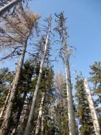Das Waldsterben am Höhenrücken ist erschreckend.