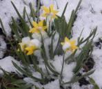 Manche träumen schon vom Frühling ...