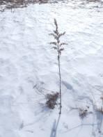 """Einzelne Pflanzen haben Sturm und Schnee """"überstanden""""."""